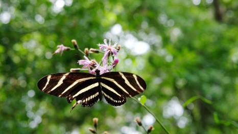Yelow Black Butterfly